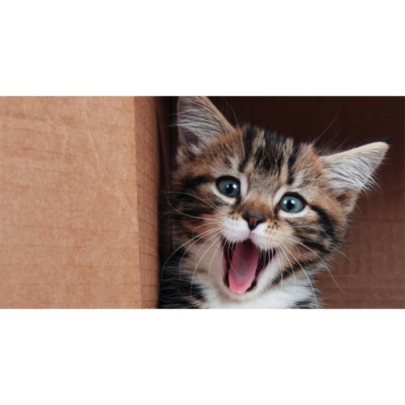 Covoras bucatarie Davo Pro Kitten nylon bej si maro dreptunghiular 50x80cm 33024