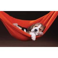 Covoras bucatarie Davo Pro Puppy nylon portocaliu dreptunghiular 50x80cm cod 33028
