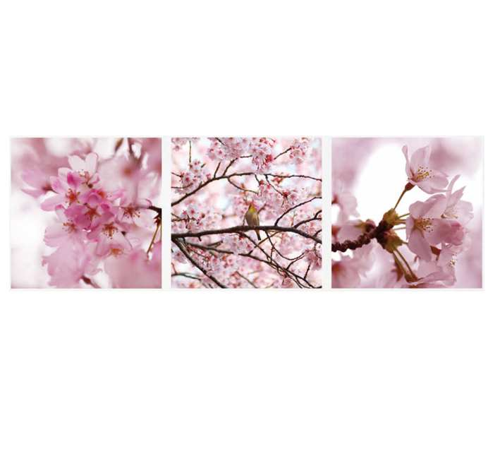 Sticker Panoramic 3 Bucati Cherry Flowers